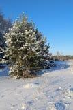 Piękny zimy landscape Zima las na słonecznym dniu Fotografia Royalty Free