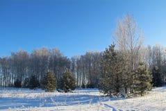 Piękny zimy landscape Zima las na słonecznym dniu Zdjęcie Royalty Free