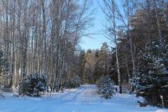 Piękny zimy landscape Zima las na słonecznym dniu Zdjęcie Stock
