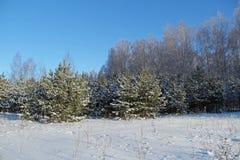 Piękny zimy landscape Zima las na słonecznym dniu Obraz Royalty Free