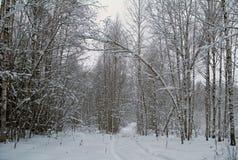 Piękny zimy landscape Zima las w śniegu Zdjęcie Stock