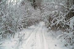 Piękny zimy landscape Zima las w śniegu Obrazy Royalty Free