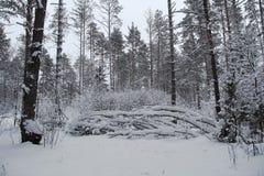 Piękny zimy landscape Zima las w śniegu Fotografia Royalty Free