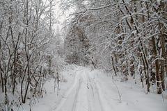 Piękny zimy landscape Zima las w śniegu Obrazy Stock