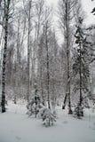 Piękny zimy landscape Zima las w śniegu Zdjęcie Royalty Free