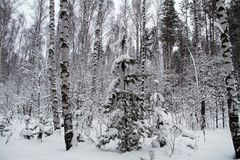 Piękny zimy landscape Zima las w śniegu Obraz Stock