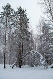 Piękny zimy landscape Zima las w śniegu Zdjęcia Royalty Free