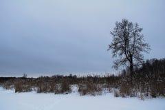 Piękny zimy landscape Zima las w śniegu Fotografia Stock
