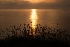 Piękny zmierzch na morzu z trawą i ucho w przedpolu Zdjęcia Royalty Free