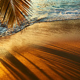 Piękny zmierzch przy Seychelles wyrzucać na brzeg z drzewko palmowe cieniem Obrazy Stock