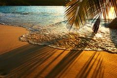 Piękny zmierzch przy Seychelles wyrzucać na brzeg z drzewko palmowe cieniem zdjęcia stock