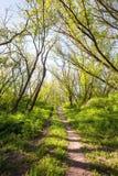 Piękny zmierzch w magicznym lasowym śladzie niebieska spowodowana pola pełne się chmura dzień zielonych roślin krajobrazu ruchu p Obrazy Stock