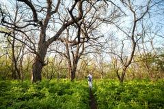 Piękny zmierzch w magicznym lasowym śladzie niebieska spowodowana pola pełne się chmura dzień zielonych roślin krajobrazu ruchu p Obraz Stock