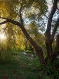 Piękny zmierzch w parku na brzeg staw zdjęcia stock
