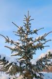 pięknych bożych narodzeń ilustracyjny drzew wektor Obrazy Royalty Free