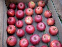 Pięknych czerwonych spadków jabłek drewniana skrzynka obraz stock