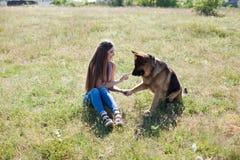 Pięknych kobiety kochanki szkół psi Sheepdog ładny obraz stock