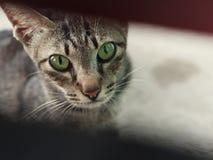 Pięknych kotów plenerowy patrzeć blisko drewnianego drzwi zdjęcia royalty free