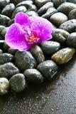 pięknych kropelek storczykowa purpurowa skał woda Zdjęcie Stock