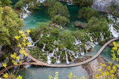 pięknych prądów świeży zielony plitvice otaczał roślinności siklawy Fotografia Royalty Free