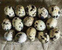 Piętnaście przepiórek jajek w jasnej plastikowej tacy strzelali od above na beżowym tle Obraz Royalty Free