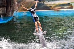 piłka delfinów gier show zdjęcie stock