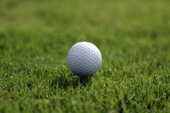 Piłka Golfowa trójnika trawa zdjęcie stock