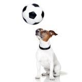 Piłka nożna pies Obrazy Stock