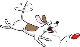 piłka pies jego Zdjęcia Royalty Free