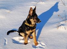 piłka pies jego cień Obrazy Royalty Free