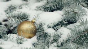 piłki gałęziastych bożych narodzeń jedlinowy drzewo zbiory wideo