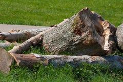 piłujący drewno Fotografia Stock
