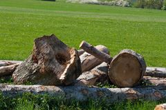 piłujący drewno Obrazy Royalty Free