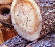piłujący drewno Fotografia Royalty Free