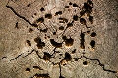 Piłujący drewno z dziurami obrazy royalty free