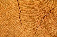 Piłujący drewno z pęknięciami Obrazy Stock