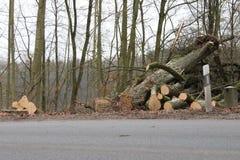 Piłujący drzewnego bagażnika drewno Fotografia Royalty Free