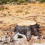 piłujący drzewo Fotografia Royalty Free