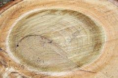 piłujący drzewo Zdjęcie Stock