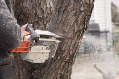 Piły łańcuchowej rozcięcie w drzewo Obrazy Royalty Free