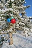 piłek colour futerka trzy drzewo Zdjęcia Stock