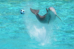 piłka delfinów gier show obraz stock