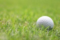 Piłka golfowa na drewnianym golfowym trójniku Zdjęcie Stock