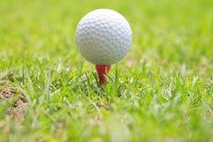 Piłka golfowa na drewnianym golfowym trójniku Obrazy Royalty Free
