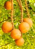piłki drzewo Zdjęcia Stock