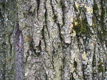 Piękna barkentyna z zielonym mech Obraz Stock