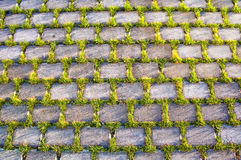 piękna beton trawy tekstura Fotografia Stock