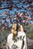 Pi?kna blondynki m?oda kobieta w Sakura Czere?niowego okwitni?cia parku w wio?nie cieszy si? natur? i czas wolnego podczas jej po zdjęcia stock