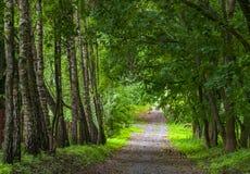 Piękna ciemniutka droga w parku fotografia royalty free