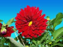 piękna clippath czerwony kwiat zdjęcie stock